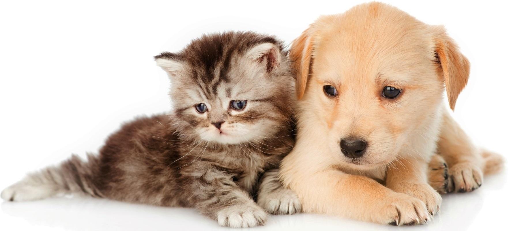 mutuelle chien et chat assurances pour les seniors. Black Bedroom Furniture Sets. Home Design Ideas